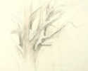 1986 Dust of Snow_18x17-5 in_pencil_410