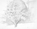 1993 Snow Lace II_8-75x9-75_pencil_1168
